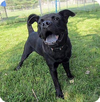 Labrador Retriever Mix Dog for adoption in Sidney, Ohio - Jet
