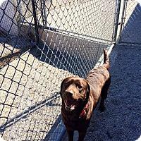 Adopt A Pet :: Java - Cumming, GA