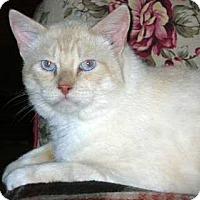 Adopt A Pet :: Frostie - Davis, CA