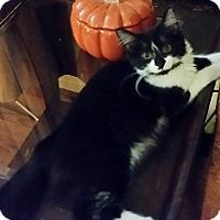 Adopt A Pet :: Delphanna - North Highlands, CA