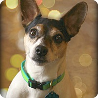Adopt A Pet :: Jack-Pending Adoption - Omaha, NE