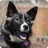 Adopt A Pet :: Wilda - Ile-Perrot, QC