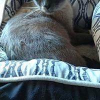 Adopt A Pet :: Luna - Lexington, NC