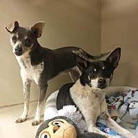 Adopt A Pet :: Larry - Post, TX