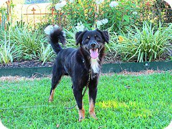 Spaniel (Unknown Type) Mix Dog for adoption in Hartford, Connecticut - YODA