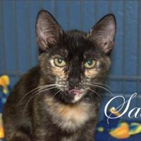 Adopt A Pet :: Sally - Middleburg, FL
