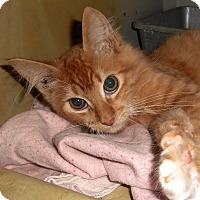 Adopt A Pet :: Renne - Chattanooga, TN