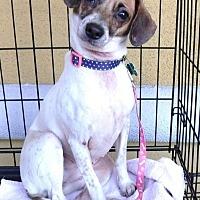 Adopt A Pet :: Nebula - Las Vegas, NV