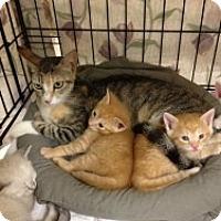 Adopt A Pet :: Dot - Fort Lauderdale, FL