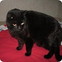 Adopt A Pet :: Mandy - Shelton, WA