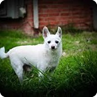 Adopt A Pet :: Randy - justin, TX