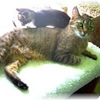 Adopt A Pet :: Abby - Shelton, WA
