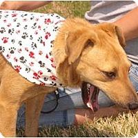 Adopt A Pet :: Chance - Russellville, AR
