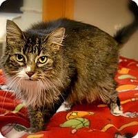 Adopt A Pet :: Dip n Dots - Byron Center, MI