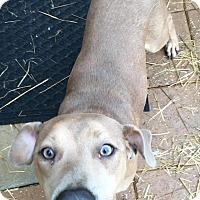 Adopt A Pet :: Lodi - Gadsden, AL