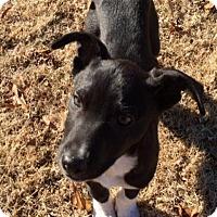 Adopt A Pet :: Buddy - Arlington, TN