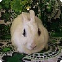 Adopt A Pet :: Firecracker - Paramount, CA
