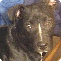 Adopt A Pet :: Duke - Cincinnati, OH