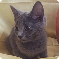 Adopt A Pet :: Smokey - Harrisonburg, VA