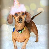 Adopt A Pet :: Heidi - Omaha, NE