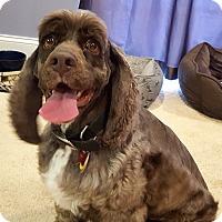 Adopt A Pet :: Remy - Bedford, VA