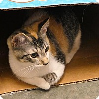 Adopt A Pet :: Cheeto - san diego, CA