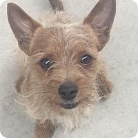 Adopt A Pet :: Oliver - Las Vegas, NV