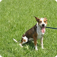 Adopt A Pet :: RAYNA - Norfolk, VA