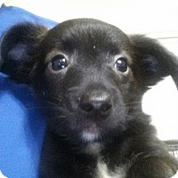 Adopt A Pet :: FRANK-ADOPTED - East Windsor, CT
