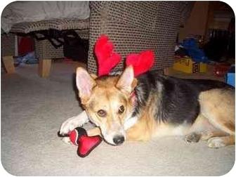 Collie/German Shepherd Dog Mix Dog for adoption in Spruce Grove, Alberta - Ellie