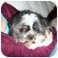 Photo 3 - Shih Tzu Mix Dog for adoption in Calgary, Alberta - Skipper