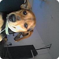 Adopt A Pet :: Carter - Washington, NC