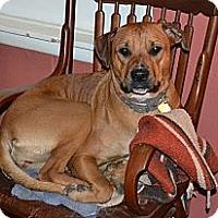 Adopt A Pet :: Miss Piggy - Fort Worth, TX