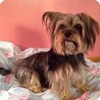 Adopt A Pet :: Gia- Adoption Pending - Hilliard, OH