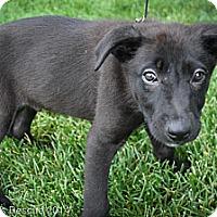 Adopt A Pet :: BlackHawk - Broomfield, CO