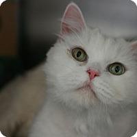 Adopt A Pet :: Candy - Canoga Park, CA