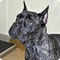 Adopt A Pet :: Dani - Port Washington, NY