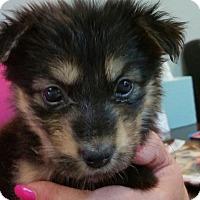 Adopt A Pet :: Ramona - Phoenix, AZ
