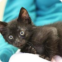 Adopt A Pet :: Bart - Canoga Park, CA