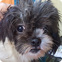 Adopt A Pet :: Sherrie - ADOPTED!! - Antioch, IL