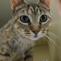 Adopt A Pet :: Lilianna - Verona, WI