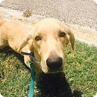 Adopt A Pet :: Snoopy - Texas - Fulton, MO