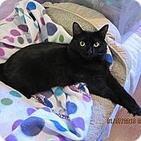 Adopt A Pet :: Jasmine - Long Beach, CA