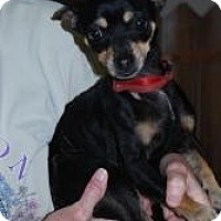 Adopt A Pet :: Killer - New Milford, CT