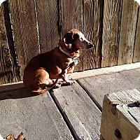Adopt A Pet :: Memna
