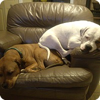 Adopt A Pet :: URGENT ABBEY AND HAMISH - Cornwall, ON