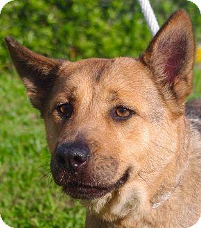 German Shepherd Dog Mix Dog for adoption in Daytona Beach, Florida - Maggie