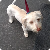 Adopt A Pet :: Thomas - Simi Valley, CA