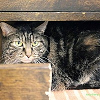 Adopt A Pet :: Regina - Paris, ME