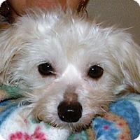 Adopt A Pet :: Casper - Allentown, PA
